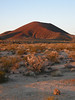 Mojave National Preserve : A Thanksgiving-week car-camp in the Mojave with Bela